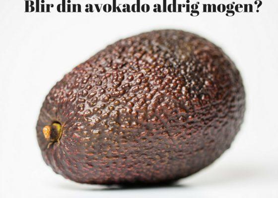 Få din avokado att mogna fortare så här
