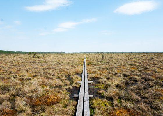 Vandra och prata företagande i Store Mosse Nationalpark