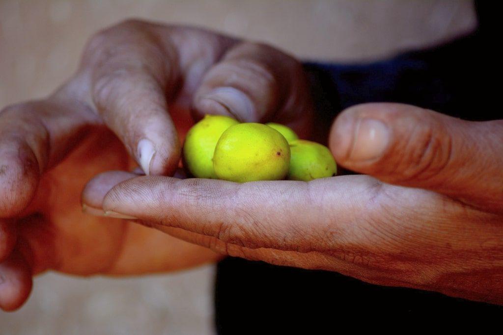 frukt från arganträdet